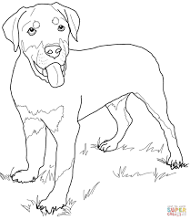 Small Picture Golden Retriever Puppy Coloring Page inside Coloring Pages Draw A