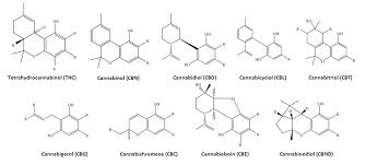 Marijuana Supplement Science Based Review On Benefits