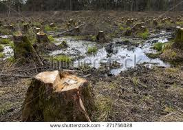 cut down tree stock images royalty free images vectors