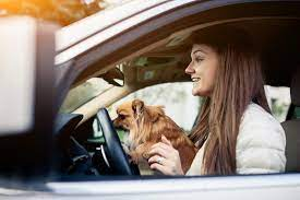 Risks of Allowing Pet Passengers to Roam While Driving | Johnson & Gilbert,  P. A.
