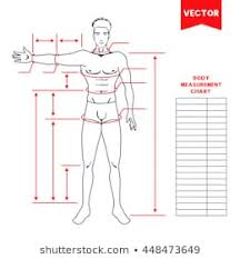 Body Measure Stock Vectors Images Vector Art Shutterstock