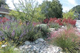 Small Picture Pacific Horticulture Society Lush Colorful and Water wise An