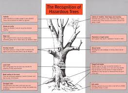 Tree Risk Assessment Value Tree Service Austin Texas