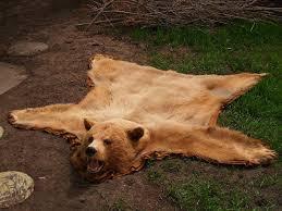 Best 25+ Bear skin rug ideas on Pinterest   Bear rug, Woodland nursery and  Woodland room