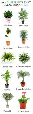 House plants kalanchoe 10 houseplants that clean the air