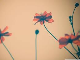Flowers Tumblr Ultra HD Desktop ...