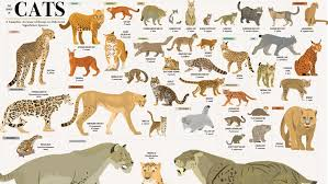 This Wall Chart Shows Every Species In The Cat Kingdom