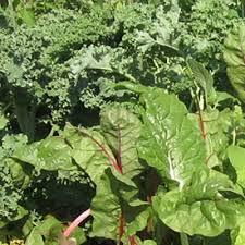 garden greens. Salad Tower Seedling Pack Garden Greens