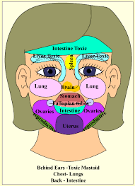 Chinese Acne Face Chart Which Organs Are Causing Your Acne My Acne Parasite