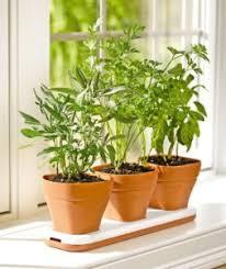 Small Picture Window Herb Garden Kit Gardening Ideas