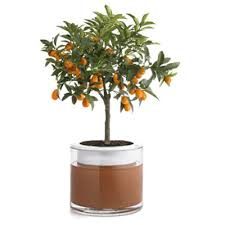Wet Pots - Allows Plants to Water Themselves