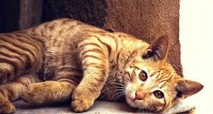 k d cat food alternative. Brilliant Alternative K D Cat Food Alternative Healthy For Kidney Disease Hills Cd  E