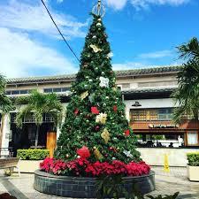 Radko Christmas Tree At Jackson U0026 PerkinsChristmas Tree Hawaii
