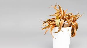Wie Sie Ihre Zimmerpflanze Richtig Pflegen Jumbo Youdoo