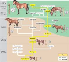 Horse Evolution Prehistoric Animals Extinct Animals