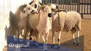 دعاء ذبح أضحية العيد وسنن الذبح من السنة النبوية الشريفة - المصري نت