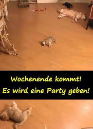 Wochenende Meme Beste Alkohol Party Lustige Sprüche Xdpedia
