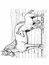 Paarden Kleurplaten Gratis Wronglatecom