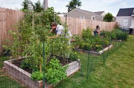 how to lay out a vegetable garden