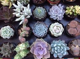 Succulent Garden Designs Beauteous This Listing Is For A Variety Of Small Succulents We Will Etsy