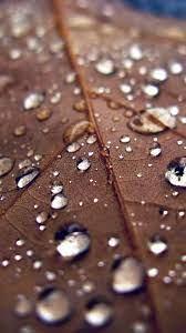 nj08-leaf-rain-water-drop-bokeh-nature-blue
