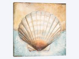 Seashell Collection Iii Canvas Art Print By Patricia Pinto Icanvas