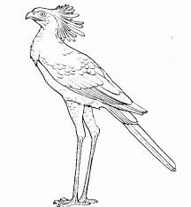 Small Picture 8 best Bird of prey images on Pinterest Birds of prey Coloring