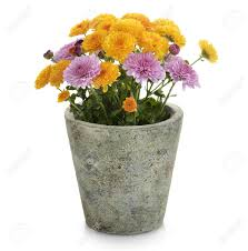 Flower Pot (7)