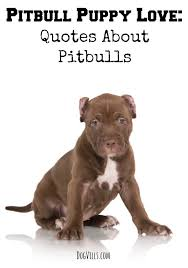Dog Quotes Love And Loyalty Impressive Pitbull Puppy Love Quotes About Pitbulls DogVills