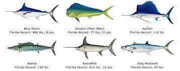 Various Fish Chart Florida Fish Fish Chart Colorful Fish
