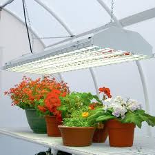 lighting for houseplants. Artificial Lighting For Houseplants