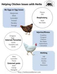 Chicken Disease Chart What Herbs Keep Chickens Healthy Timber Creek Farm