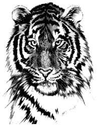 Tiger Face Kerky Tetování Galerie Gameplaynet
