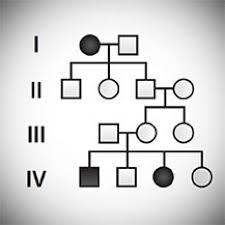 Biology Pedigree Chart Maker Mendelian Genetics Probability Pedigree And Chi Square