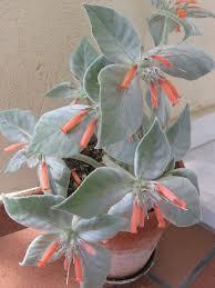 Resultado de imagen para hojas plateadas