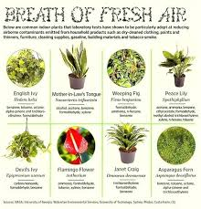 common indoor plants that improve air quality types of australian