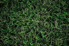 Grass background Blur Grass Background Everystockphoto Grass Background Photo Page Everystockphoto