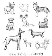 dogs drawings. Delighful Drawings A Collection Of Sketches Breed Dogs Isolated Hand Drawings With Dogs Drawings G