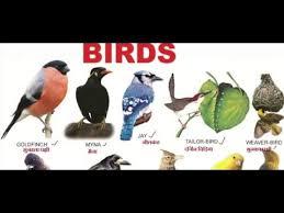 Hindi Birds Name Chart