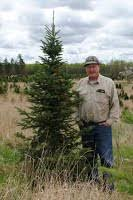 A Christmas tree ready for harvest ...