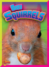 Baby Squirrels Adorable Animals Justin Eric Russell