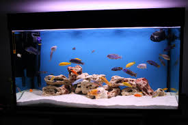Funny Fish Tank Decorations Spring Cleaning Tips For Your Fish Aquarium Wishforpets