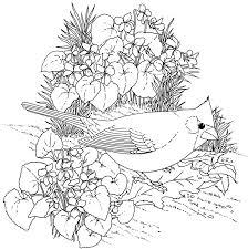 Coloring Pages Free Printabled Coloring Pages Nothern Cardinal