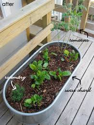 swiss chard tomatoes and rosemary growing in a metal trough
