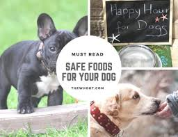 Dog Safe Food Chart Ideas What To Feed Your Dog