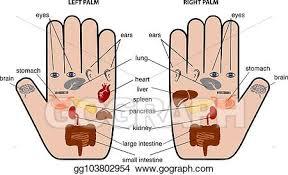 Hand Reflexology Chart Left Hand Vector Art Hand Reflexology Chart Vector Illustration Eps