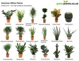 office plants interior plants and plants on pinterest best office plant no sunlight