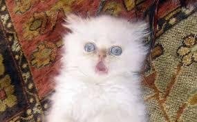 20-Funny-Shocked-Cat-Memes-9.jpg via Relatably.com
