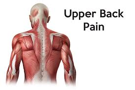 Anatomy back upper illustrations & vectors. Upper Back Braces Supports For Upper Back Pain Posture
