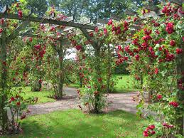Small Picture rose garden design ideas 1652 hostelgardennet